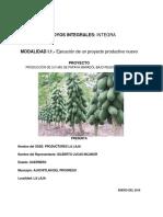 Proyecto Papaya 3.0 Has Producores La Laja (1)
