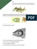Sistema Respiratório Dos Peixes