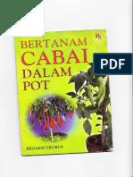 Budidaya Cabai Dalam Pot