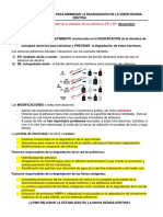 Reducir la degradación de la unión Resina-dentina.docx