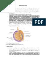Repaso de Anatomia