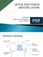 Struktur Dan Fungsi Jantung Dasar