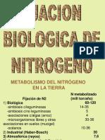N Fijacion Biologica
