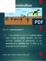 Seed Germination101