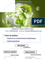 Practica Histologìa (Tejido Epitelial y Glandular