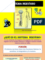 diapositivasdelsistemanervioso-121111163440-phpapp02
