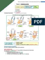 Tema 1. Embriología