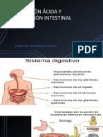 Secreción Ácida y Absorción Intestinal