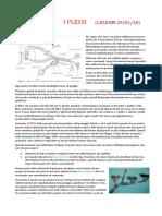 Anatomia Lez 33