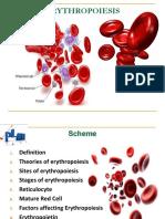 erythropoiesis-150731072608-lva1-app6891