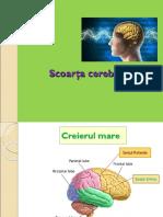 Anatomia Sc Cerebrale