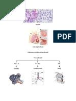 Patogenesis Pneumonia