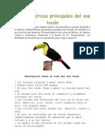 Características Principales Del Ave Tucán