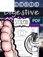 The Human Body Digestive System Freebie