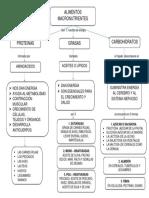 Alimentos Macronutrientes-Mapa Conceptual