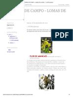 TRABAJO DE CAMPO - LOMAS DE LUCUMO_ 1. FLORA (plantas).pdf