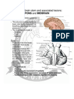 Pons and Midbrain