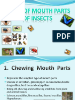 Types of Mouthparts of Insect (1)