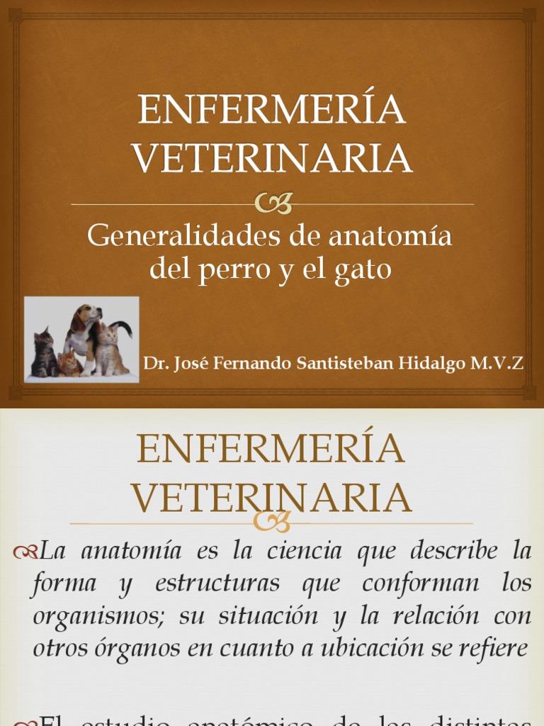1.3 Generalidades de Anatomía Del Perro y El Gato