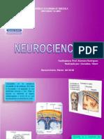 Anatomia y Fisiologia Del Cerebro