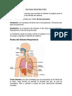 Sistema Respiratoro