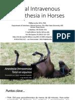 Anestesia en Equinos