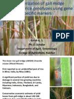 Gall Midge Resistance in Rice Genotypes