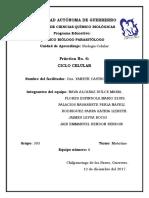 Práctica 6. B. Celular. FC