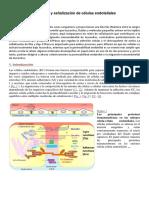 Adhesión y Señalización de Células Endoteliales
