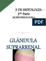 Láminas de Histología _ Parte 2