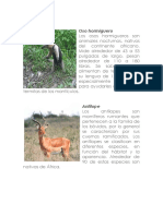 Impresion-Animales Selva Tropical