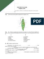 Euglena Verde