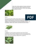 25 Plantas Medicinales, Para Que Sirve y Nombre