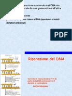 5 DNA Riparazione 2017_18