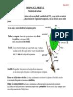 tejidos de las hojas.pdf