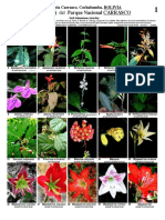 Las flores y plantas del Parque Nacional Carrasco en Cochabamba
