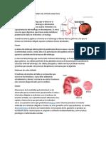 Enfermedades Más Comunes Del Sistema Digestivo