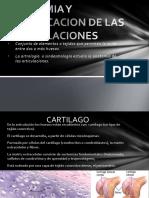 anatomiayclasificaciondelasarticulaciones-130225203653-phpapp01