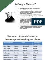 Genetics Punnett Square
