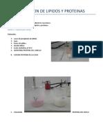 DETERMINACION D PROTEINAS Y LIPIDOS .doc