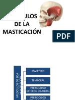 Músculos de La Masticación y Atm