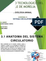 Presentacion Sistema Circulatorio-u2-Rangel Cortes Ulises