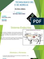 Presentación Sistema Endocrino fisiología animal