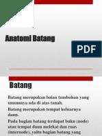 2011711041 Vabelta Anatomi Batang