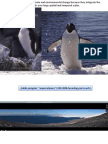 More information about the Adelie penguins