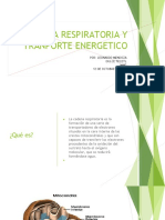 Cadena Respiratoria y Tranporte Energetico