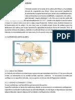 Biomecanica de La Cadera Word