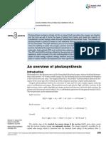Photosynthesis by Matthew P. Johnson