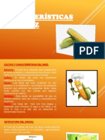 Diapositivas Del Maiz ROSA