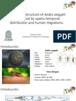 Estructura de las poblaciones de Aedes aegypti